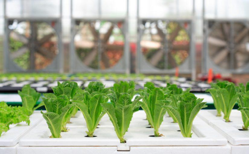 新しい農体験「水耕栽培」の魅力と新たな可能性とは Farm Park Project(ファームパークプロジェクト)